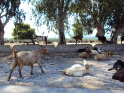 Tiewelt in Griechenland: Alles vertreten