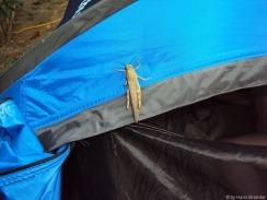 Andrea verteidigt unser Zelt vor...